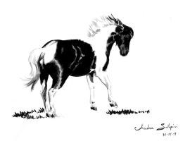 Horse - ink and brush by AndreaSchepisi