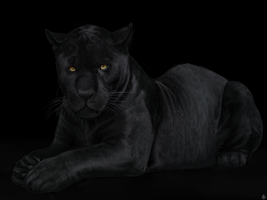 The Black Panther. by Alexandoria