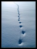 Animal's footprints by MikeleSVK