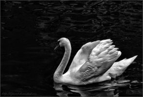 Swan song by D-punct