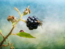 Brombeere by Cundrie-la-Surziere