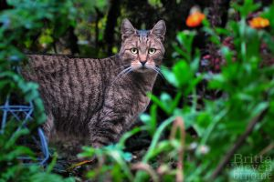 Mothers cat by brijome