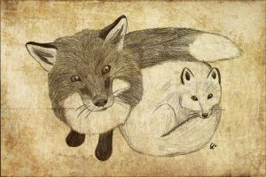 Red and Arctic Fox by NightMagican