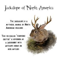 Jackalope of North America by Silver-Noctis