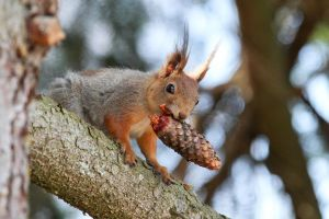 Squirrel eating by BIREL