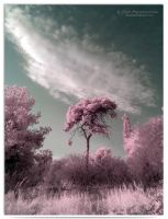 Pastel - infrared by LightSculpting