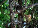 Ginger Kittie by PaolaZunico