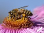 Bee time by albatros1