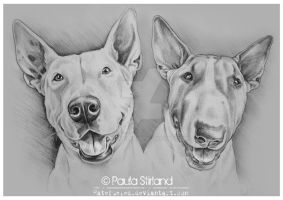Bull Terrier Buddies by hatefueled