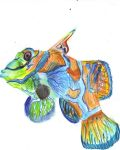 Psychedelic Mandarinfish by AlliCali