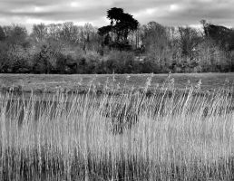 Reeds7397 by filmwaster