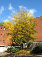Fall tree by CotyStock