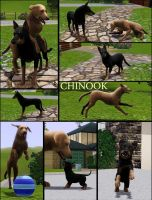 The Sims 3 Pets Chinook Dogs by huntinlabs