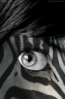 Eye of the Zebra by Crazy-Kiwii