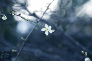 Message From Spring by AiviTo