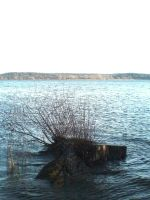 Tree Stump in High Water STOCK by ChaosStocks