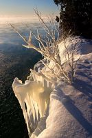 Icy Tree 2 by FAceleSS-21