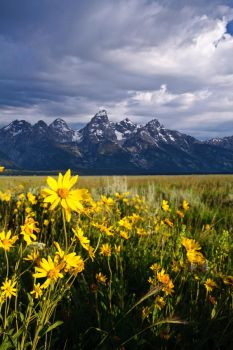 Summer in the Tetons by mikewheels