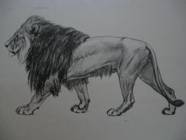 Lion by Raegreal