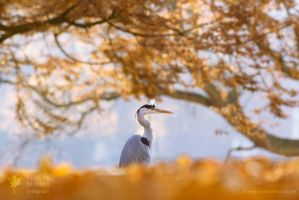 The Blue Heron and The Red Tree by thrumyeye