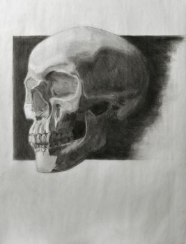 Skull Drawing by SeaQuenchal