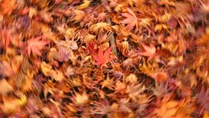 Autumn Abstract 03 by theblindalley