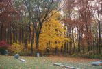 Yellow Cemetery Tree by almosthuman75
