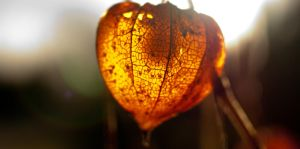 Fireworks of autum 12 by macgl
