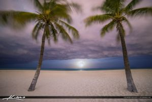 Moon-Rise-at-Beach-Between-Coconut-Tree by CaptainKimo
