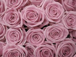 Textura floral by chey-swagTDP