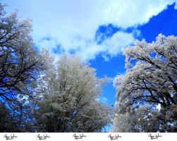 Infrared Stock - 2013 - 32 by ElaineSeleneStock