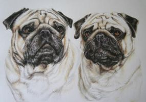 A Pair of Pugs by PetPawtraitArtist