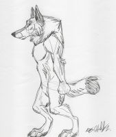 Another Werewolf Sketch by Hawaiifan