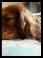 From the eye of a dog. by MUA-Maano
