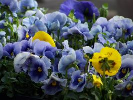 Yellow Among Blue by theNanna