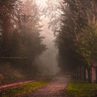 Foggy October by Violet-Kleinert