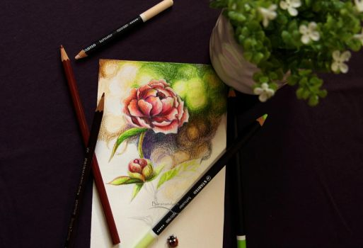 Colored Pencils - Flower Practice by barananduen