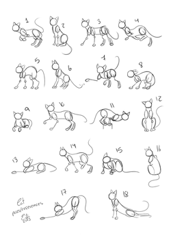 Cats Poses References by EifiHanaki