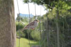 A little birdie sitting on a fence by CheeseBurgerDeluxe