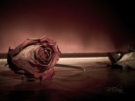 Remains of Love. by SweetPandemonium90