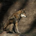 The look by wolf-minori