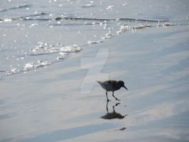 Baby Seagull 3 by Charlief43