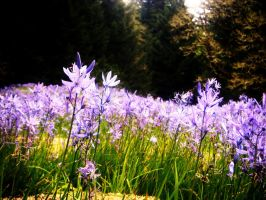 Camas Lily's by orangepeacock13