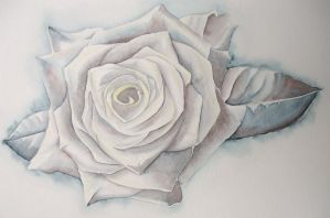 White Rose by Betws-Y-Coed