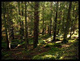 A Walk in The Forest by dvartdal