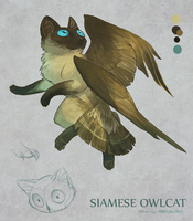 Adoptable AUCTION: Siamese Owlcat by Katmomma