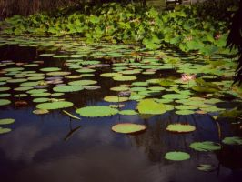 Lilly pads 3 by Girlayy