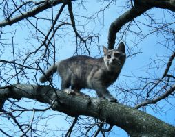 charla climbed the tree by peacelovebeatles