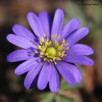 A little flower 2 by bluesgrass