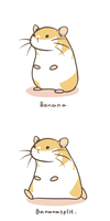 Banana the Hamster by aconite-pawlove